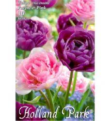 Bulbi de lalele duo flori involte mov - roz (10 bulbi), Holland Park