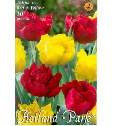 Bulbi de lalele duo flori involte rosu - galben (10 bulbi), Holland Park