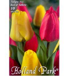 Bulbi de lalele duo rosu - galben (10 bulbi), Holland Park