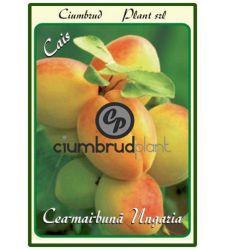 Cais Cea mai buna de Ungaria, Ciumbrud Plant