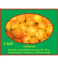 Cais Sulmona, Ciumbrud Plant