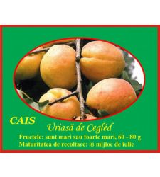 Cais Uriasa de Cegled, Ciumbrud Plant