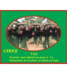 Cires Van, Ciumbrud Plant