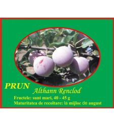 Prun Renclod Althan, Ciumbrud Plant