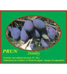 Prun Stanley, Ciumbrud Plant