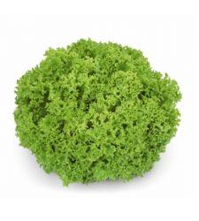 Seminte drajate salata creata lollo Lozano (1.000 seminte), Rijk Zwaan