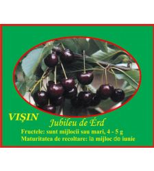 Visin Jubileu de Erd, Ciumbrud Plant